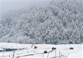 مقبوضہ کشمیر میں برفانی تودہ گرنے سے 5 افراد جاں بحق، 5 لاپتہ