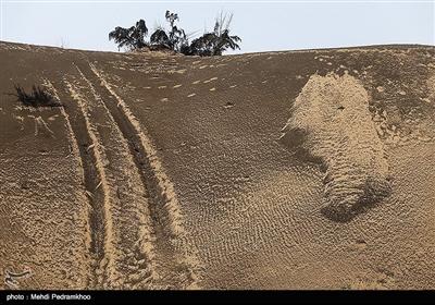 شنزارهای جنوب غرب خوزستان هزاران سال است که وجود دارند درحالی که ریزگردها از دو سه دهه پیش همزمان با نابودی تالاب های وسیع میانرودان پدیدار شدند.