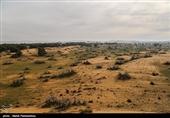 54 هزار هکتار عرصه بیابانی استان البرز را به یکی از کانونهای ریزگرد داخلی تبدیل کرده است