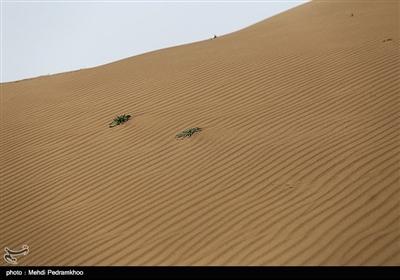 ریزگردهای خوزستان منشاء تالابی دارد و بسیار دانه ریز است درحالی که تپه های ماسه ای درشتدانه هستند و همیشه هم بودند و قابلیت ایجاد غبار در هوا را ندارند