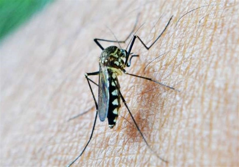 Recent Study Increases Hopes for Eradication of Malaria