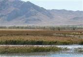بارشهای اخیر تالاب گندمان در چهارمحال و بختیاری را احیا کرد