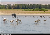 وقتی ظرفیتهای طبیعی دریاچه ارومیه برای جذب گردشگر فراموش میشود