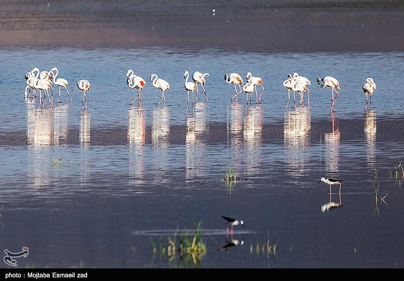 افزایش آب جریان حیات را به تالابهای اطراف دریاچه ارومیه برگرداند+تصاویر