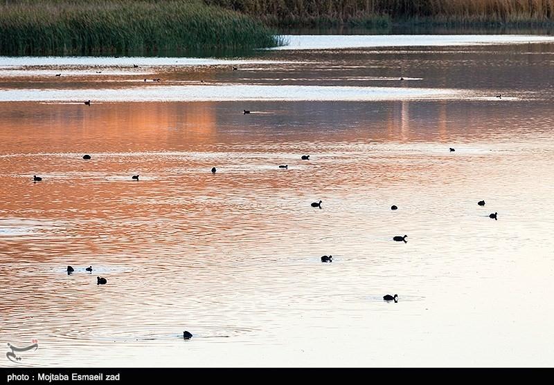 پارک ملی دریاچه ارومیه؛ زیستگاه کمنظیر حیاتوحش ایران