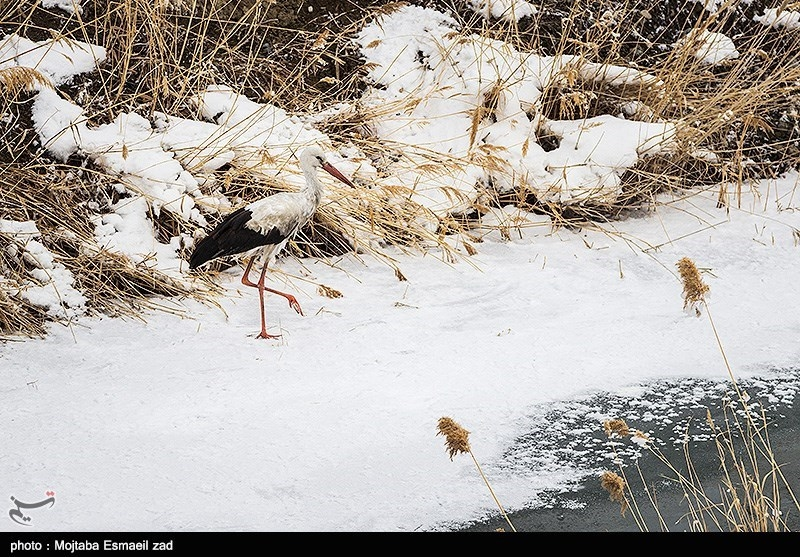 Kani Barazan Wetland: One of the Most Important Wetlands in Iran - Tourism news