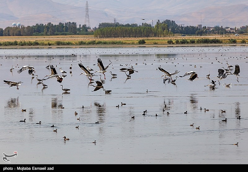 Kani Barazan Wetland: One of the Most Important Wetlands in Iran