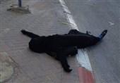 شهادت یک زن فلسطینی با شلیک مستقیم نظامیان صهیونیست