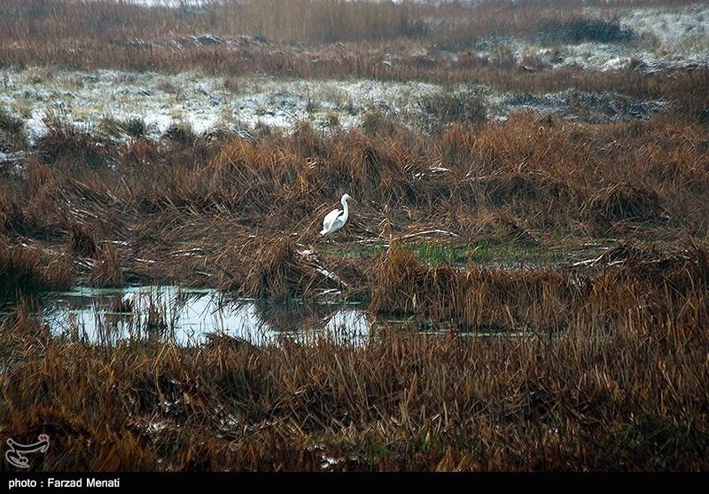 هشیلان که به دلیل مأوا دادن به پرنده های مهاجر جزء مناطق حفاظت شده در نظر گرفته شده است، تنها تالاب استان کرمانشاه است که به عنوان یک اکوسیستم آبی همواره مورد توجه علاقه مندان به طبیعت گردی بوده است.