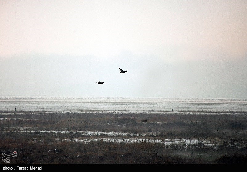 Hashilan Wetland in Kermanshah: A Tourist Attraction of Iran - Tourism news