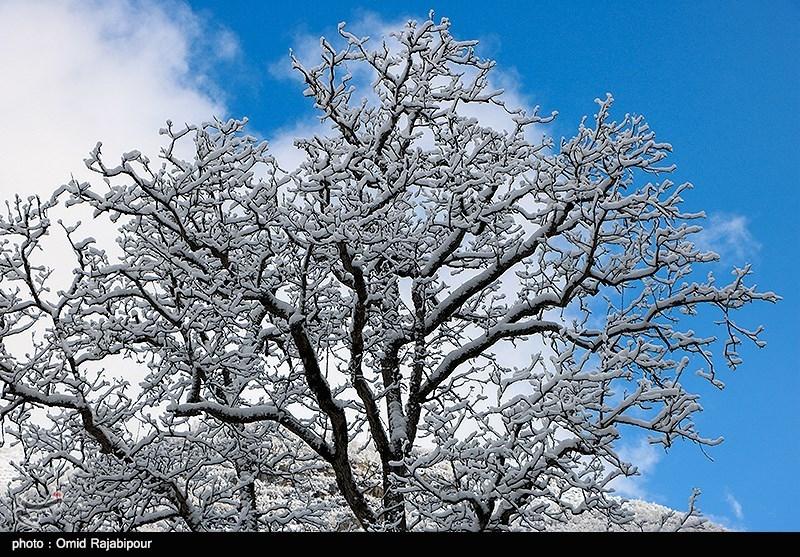 بازگشت زمستان به کویر؛ آسمان یزد برفی شد