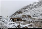 یزد | محورهای منتهی به تفت برفگیر شد