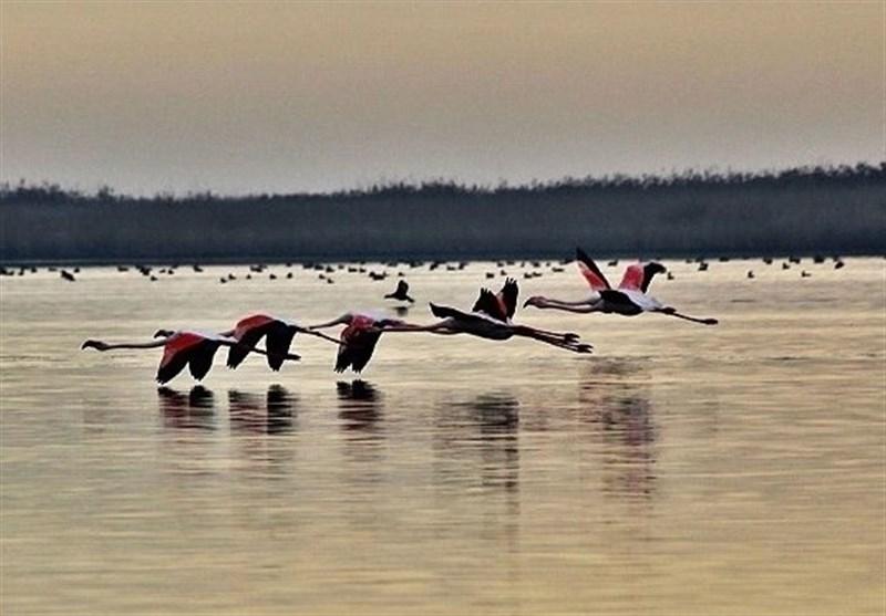 Aq Qala Wetland Complex, Gorgan, Iran - Tourism news
