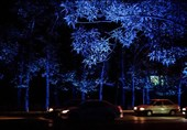 شهرداری نورپردازی شبانه درختان را قطع کند