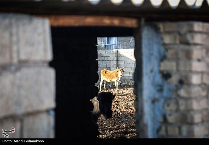 مقابله پیشگیرانه با تب برفکی در روستاهای خوزستان از دریچه دوربین تسنیم