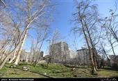 میلانی: تخریب باغهای تهران فقط با زلزله قابل مقایسه است