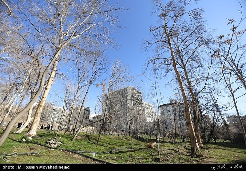 تاکید اعضای شورای شهر تهران بر رعایت ساخت تراکم در باغات