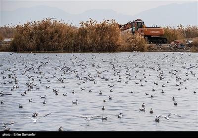 آلودگی محیط زیست بر کیفیت و چرخه طبیعی اثر می گذارد و پی آمدهای زیان باری برای زندگی انسان، حیوان وگیاهان دارد.