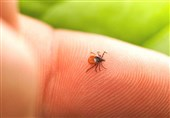 Tick Bite May Cause Red Meat Allergy