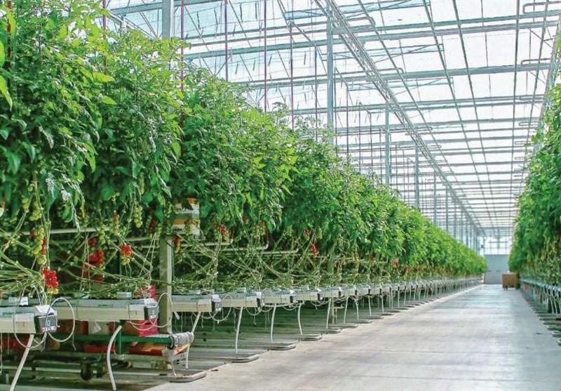 200 هکتار از شهرک کشاورزی اردبیل به سرمایهگذاران بومی واگذار میشود