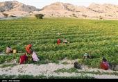 تولید محصولات کشاورزی ایران میتواند 2.5 برابر شود