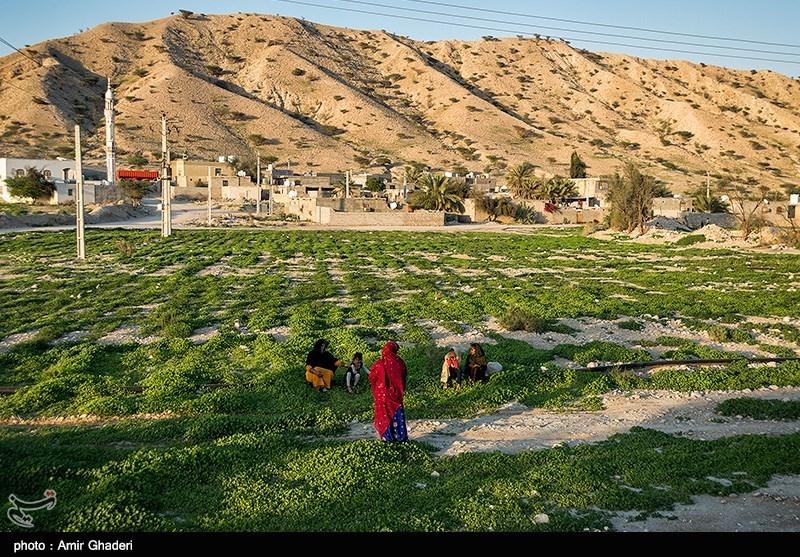 حمایت از صندوق توسعه حلقه مفقوده رونق کشاورزی در کهگیلویه