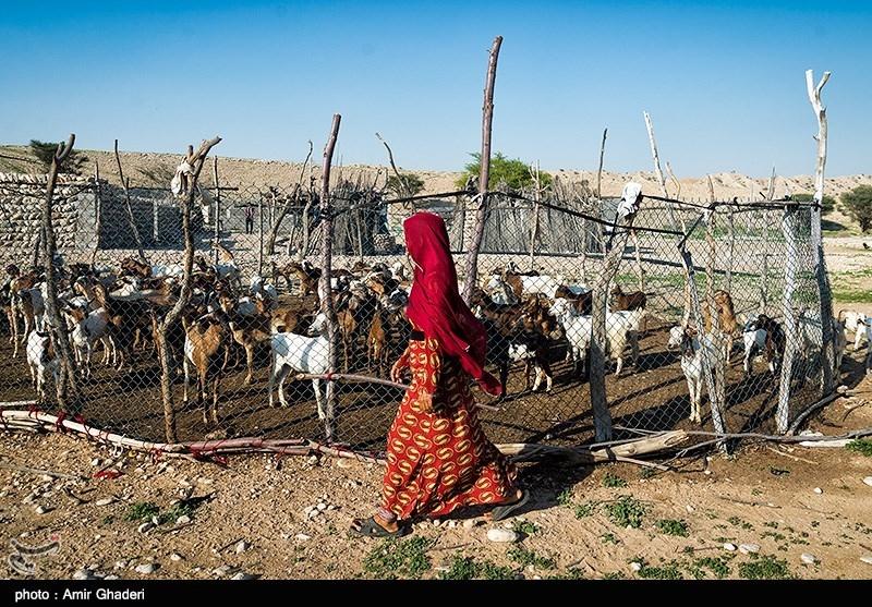 اشتغالزایی برای 2630 جوان کردستانی در بخش کشاورزی