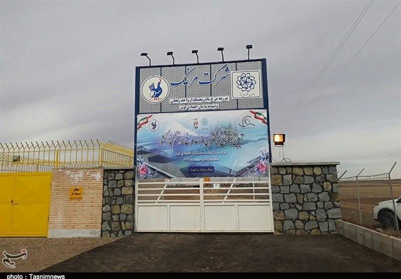 افتتاح بزرگترین مزرعه مرغ مادر تخمگذار کشور در زنجان+تصاویر