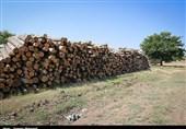 گزارش|آیندهای که به دست قاچاقچیان تباه میشود؛ تیغ تیز قاچاقچیان چوب زیر گلوی جنگلهای اردبیل