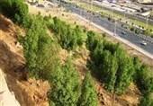 کمتر از 40 درصد کمربند سبز کرمان اجرا شده است