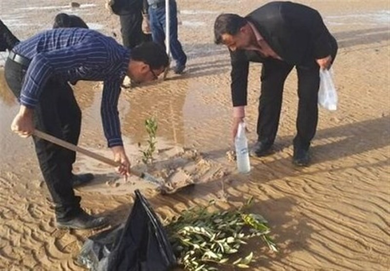 18 هکتار ساحل دهکده گردشگری بوشهر درختکاری شد