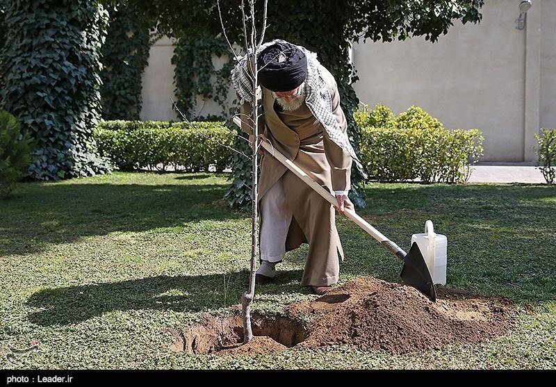 بهمناسبت روز درختکاری و هفته منابع طبیعی، رهبر معظم انقلاب اسلامی ظهر امروز (چهارشنبه) دو اصله نهال میوه غرس کردند