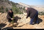 400 هکتار عملیات نهالکاری در امامزاده عبدالله(ع) قم انجام شد