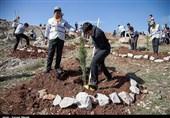 Iranians Mark National Tree Planting Week (+Photos)