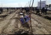 10000 نهال شهری در سطح شهر زنجان غرس میشود