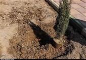پیوند سنت حسنه درختکاری و قرض الحسنه در هفته منابع طبیعی