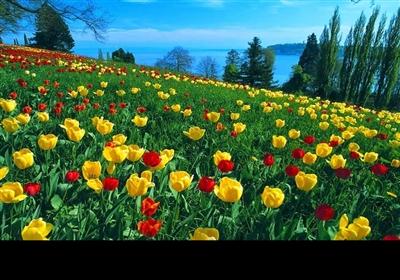 پاکستان میں موسم بہار کی آمد