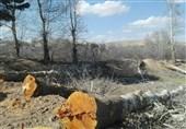 ماجرای قطع درختان در خیابان سعیدیه همدان/خشکهبری یا بیخبری مسئولان شهرداری؟