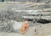جهاد کشاورزی مُخالف قَطع درختان جَنگلی در منطقه ارسباران است