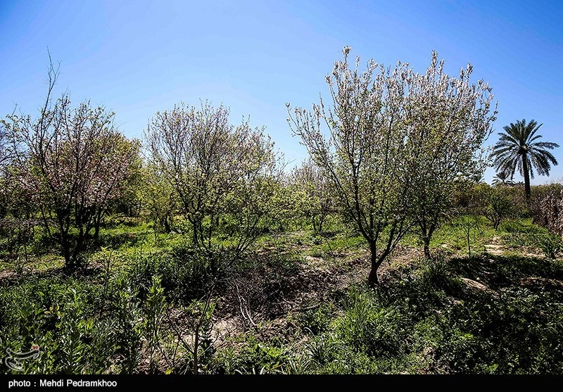 خسارت 15 میلیاردی بارندگی به باغات استان تهران