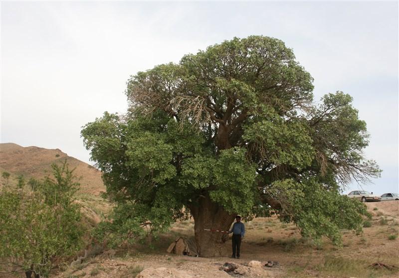 2 اثر طبیعی خراسان جنوبی در فهرست آثار ملی ثبت شد