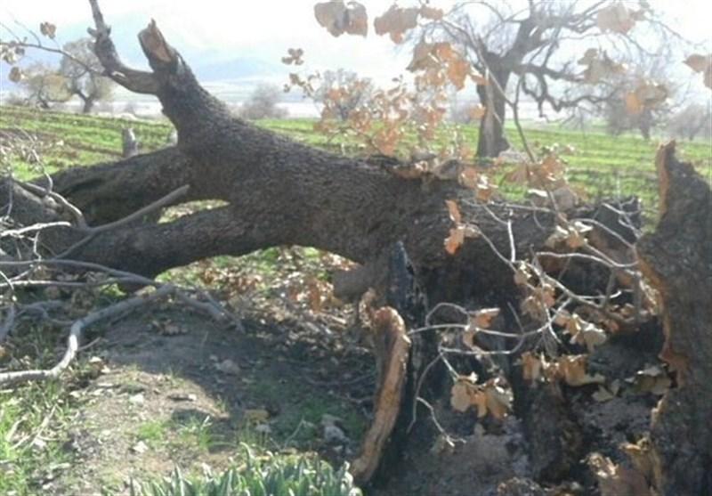 عاملان قطع درختان مسیر ایلام به سرابله به مراجع قضایی معرفی شدند