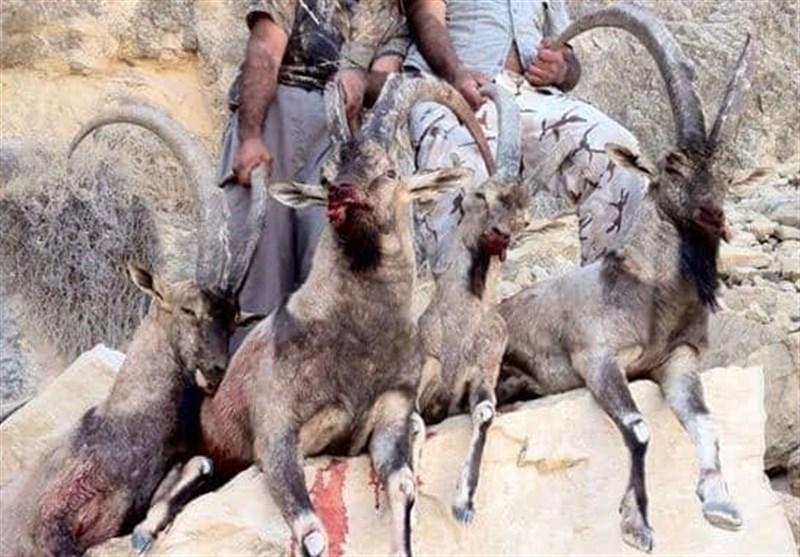 مختومه شدن بزرگترین پرونده کشتار حیات وحش کشور صرفاً با پرداخت جریمه 168 میلیونی!