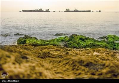 سرزمین مادری / جزیره خارک