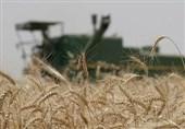تبیین دستاوردهای طرح احیای اراضی خوزستان؛ تولید کشاورزی استان 8.5 میلیون تن افزایش یافت
