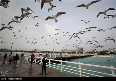 شاطىء جزیرة کیش وروعة تحلیق الطیور وجمالها