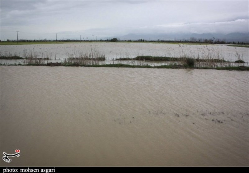 سدهای بوستان و گلستان سالم است؛ احتمال آبگرفتگی گنبدکاووس بر اثر سرریز شدن سدها وجود دارد+فیلم