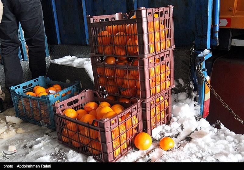 بهار 98|توزیع میوه شب عید با قیمت مصوب دولتی در مسجدسلیمان آغاز شد