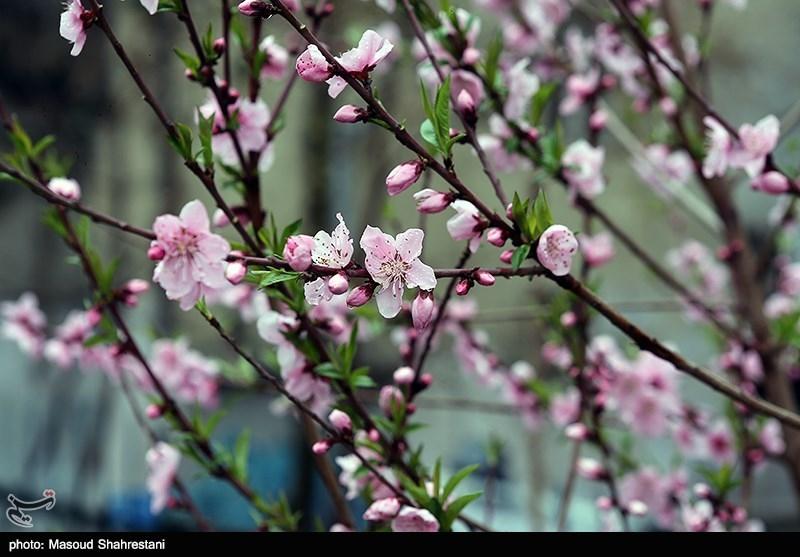 هوای تهران در هفتمین روز از بهار 98 همچنان پاک است+ عکس
