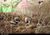 خانوادههای شهدای حزبالله لبنان از یادمان معراج شهدای اهواز بازدید کردند